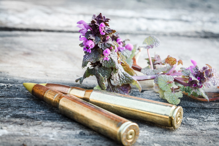 two rifle bullets on old wood desk with Flower power symbol of passive resistance (Thymus serpyllum) photo