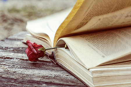 vintage open book on wood desk with rose photo