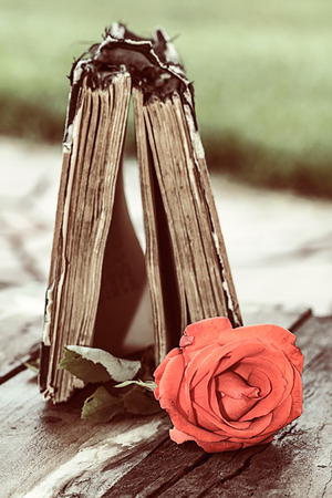vintage open book on wood desk with red rose photo