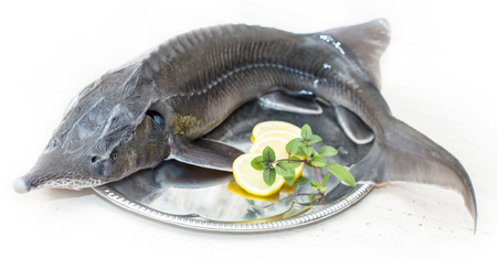 letterbox: Sturgeon (disambiguation) on a plate with lemon - letterbox look image Stock Photo