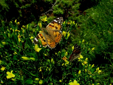 sunshine insect: butterfly