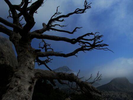 albero secco: dry tree