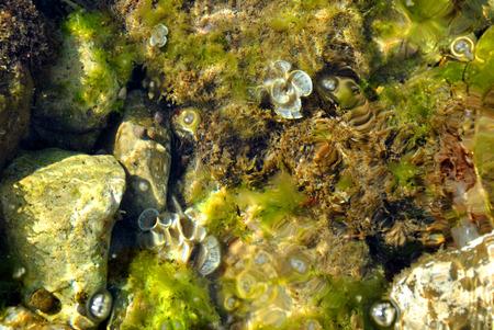Fine flowers decorate the underwater world. Stock Photo