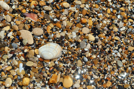Background summer of seashells and stones.