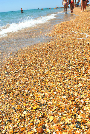 Color beautiful  background summer of seashells and sea wave Stock Photo