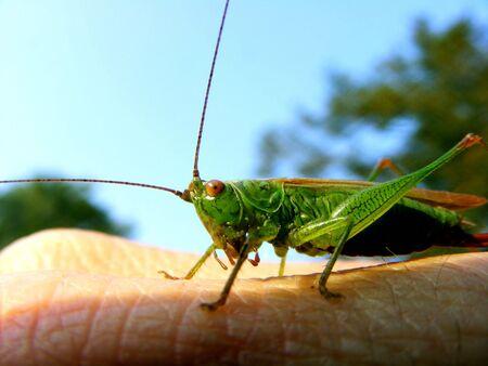 grasshopper Фото со стока