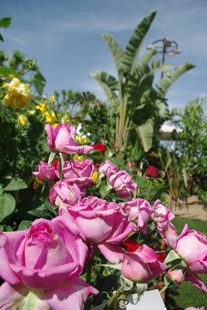 Jardin de Rosiers