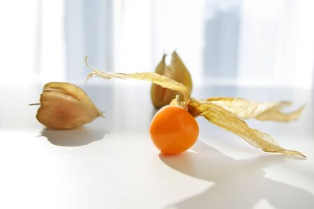 physalis: Physalis fruit isloated on a white background