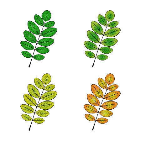 Farbvariations-Vektorillustration des Akazienblatts