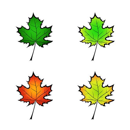 Color variation vector illustration of a maple leaf