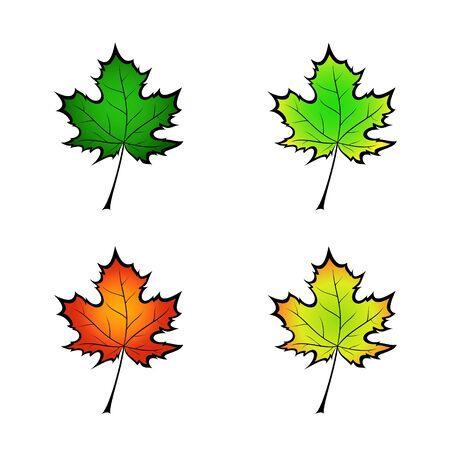 Color variation vector illustration of a maple leaf