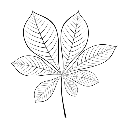 Black and white vector illustration of chestnut leaf. Vektorové ilustrace