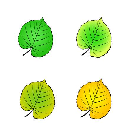 color variations of vector illustration of leaf