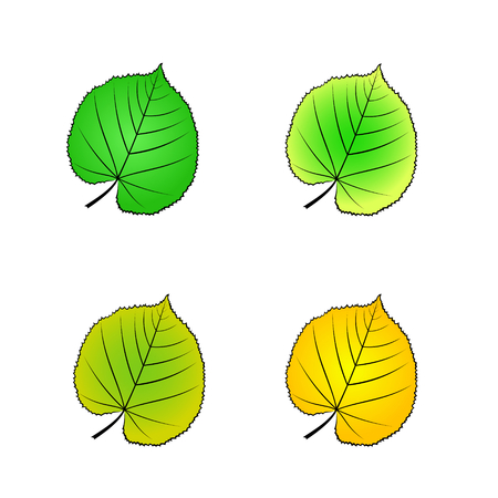 color variations of vector illustration of leaf
