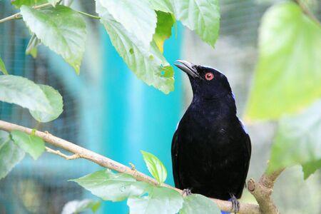 eye: A black bird standing in the branch