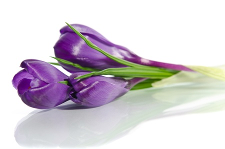 Beautiful violet crocus isolated on white Archivio Fotografico
