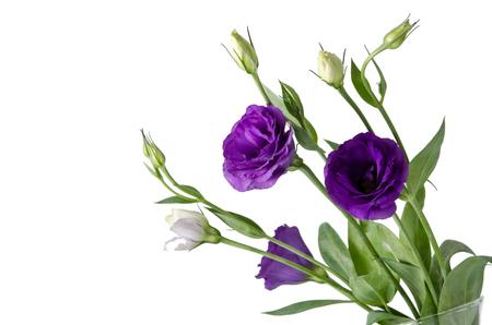 Beautiful eustoma flower Stock Photo