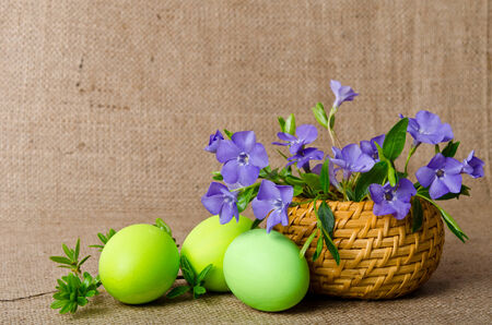 pedicel: Wicker basket with beautiful blue periwinkle and Easter green eggs