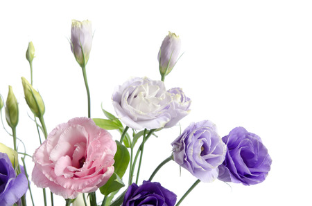 beautiful eustoma flowers with leaves and buds on white background located at the bottom left photo