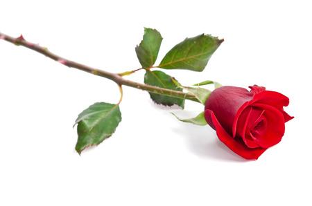 Belle rose rouge isolé sur fond blanc Banque d'images - 35683318