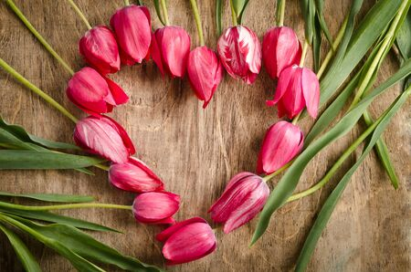 party down: The heart-shaped frame of fresh tulips is laying on an old rustic wooden background