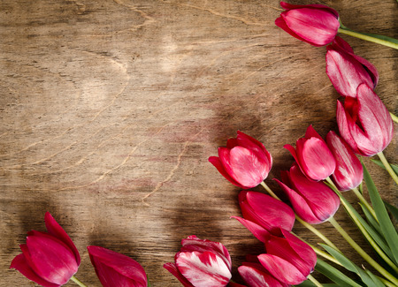party down: corner for photo from fresh tulips.