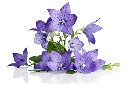 Beau bouquet de fleurs de Bell isolé sur fond blanc Banque d'images - 42139809