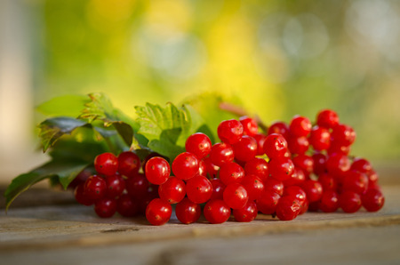guelder rose berry: Red Viburnum berries on wooden table