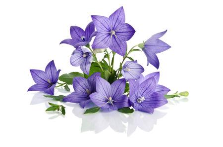 champ de fleurs: beau bouquet de fleurs de Bell isolé sur fond blanc