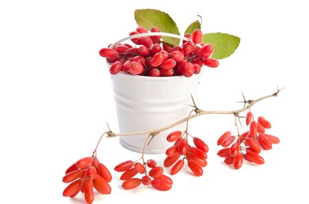 barberries: metal bucket with barberries and branch with berries isolated on white background