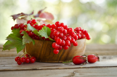 guelder rose berry: Red Viburnum berries in wooden bowl on the table with two rose hips