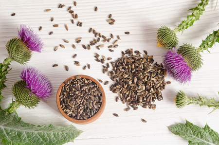 Seeds of a milk thistle with flowers