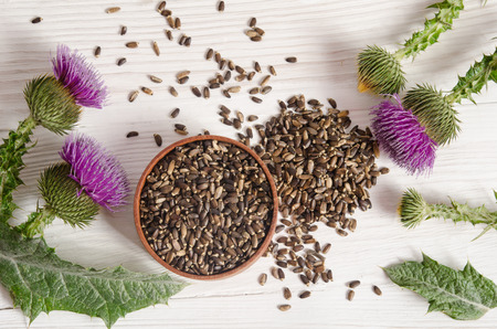 Seeds of a milk thistle with flower (Silybum marianum, Scotch Thistle, Marian thistle ) on wooden table Standard-Bild