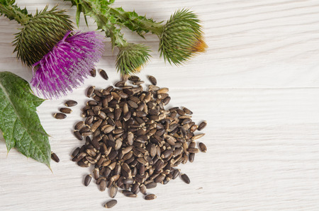 Seeds of a milk thistle with flowers (Silybum marianum, Scotch Thistle, Marian thistle ) on wooden table Archivio Fotografico