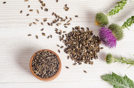 Seeds of a milk thistle with flowers (Silybum marianum, Scotch Thistle, Marian thistle ) on wooden table Stockfoto