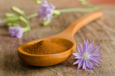 chicory coffee: Blue chicory flower and full wooden spoon of powder  instant chicory