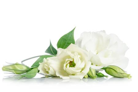 Mooie witte Eustoma bloemen op een witte achtergrond