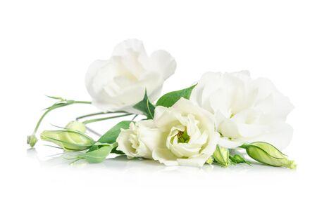 Belles fleurs blanches de eustoma isolé sur fond blanc Banque d'images - 51056762