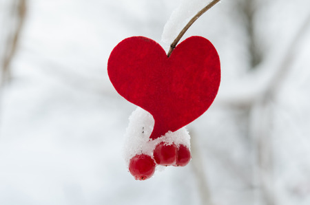 bunchy: red heart with viburnum berries covered with snow on tree, Russia