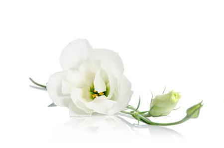Belles fleurs blanches de eustoma isolé sur fond blanc Banque d'images - 53391475