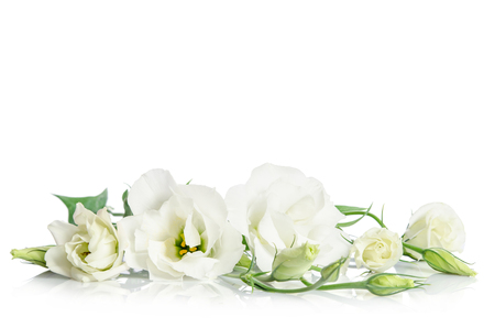 Beautiful white eustoma flowers isolated on white background 免版税图像 - 53391490