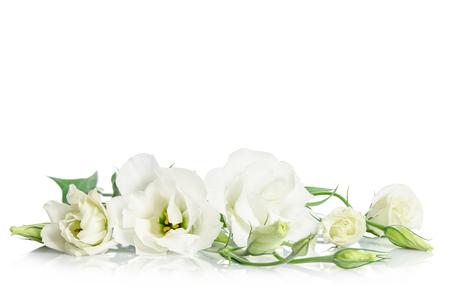 Piękne białe kwiaty Eustoma na białym tle