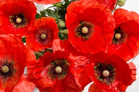 Köpfe der roten Mohnblumen. Draufsicht auf Bouquet