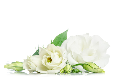 Beautiful eustoma flowers isolated on white background and free space for text at the top 版權商用圖片