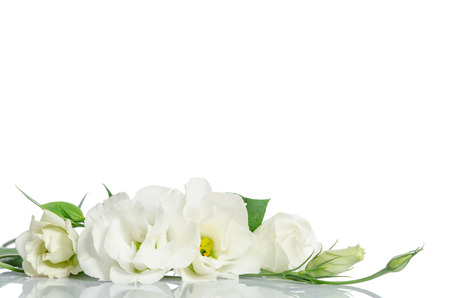 Beautiful eustoma flowers isolated on white background and free space for text at the top Imagens