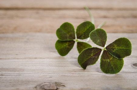 four fourleaf: two four-leaves clovers for good luck isolated on wooden background