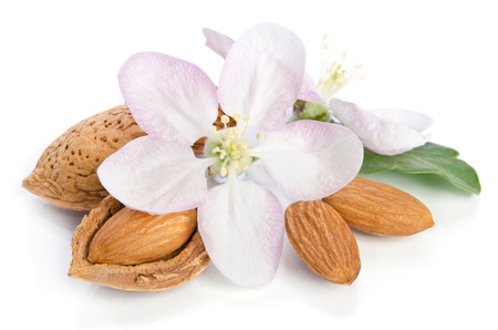 apricot kernels: Almonds with leaves and flower close up on the white background