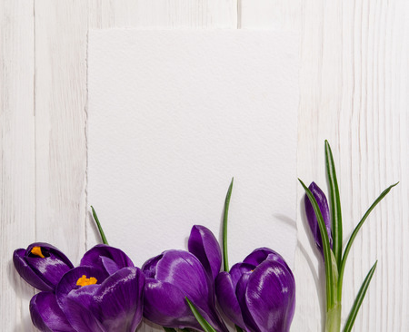 corner from crocus on wooden background with empty card for your text Stock Photo