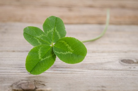 four-leaf clover for good luck on wooden background