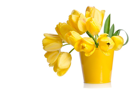 Beautiful bouquet of yellow tulips in a pot isolated on white background